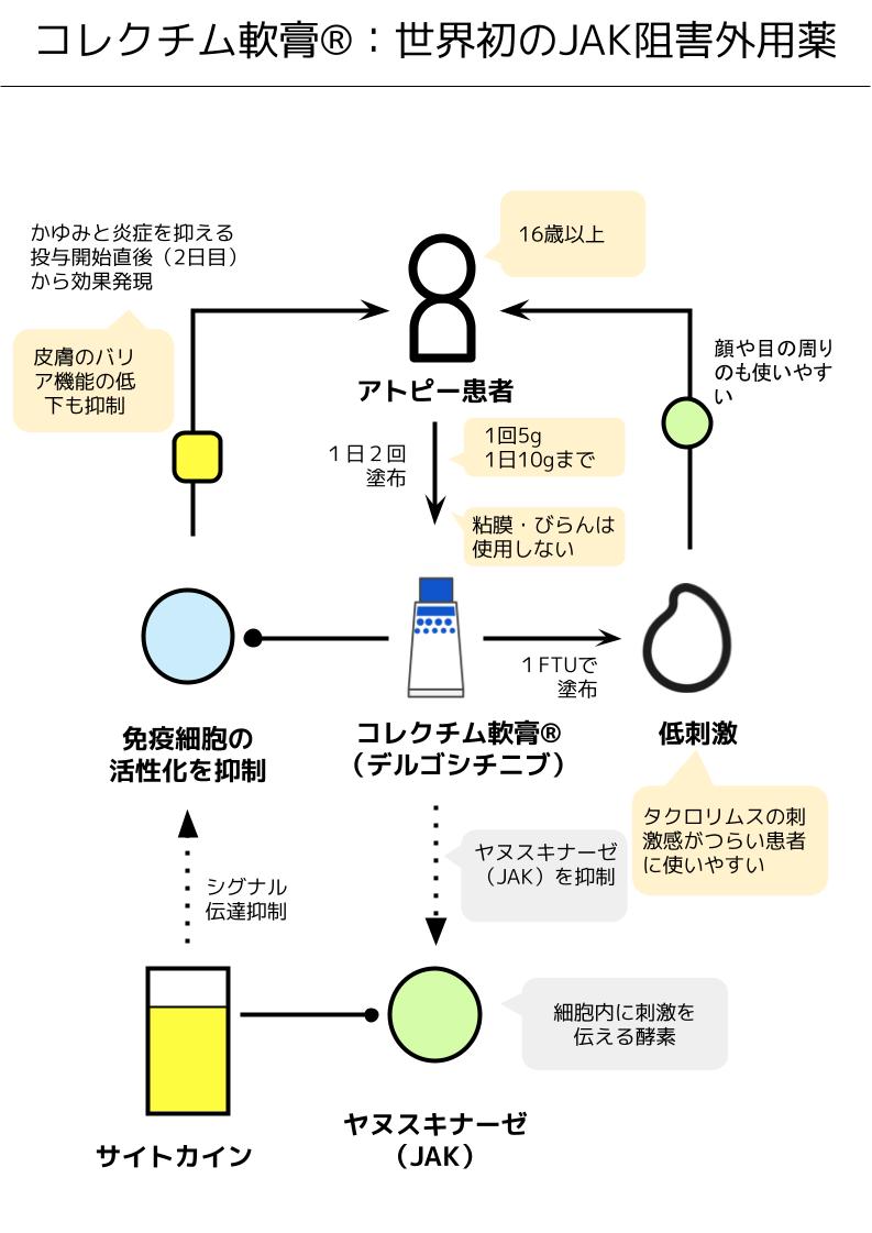 コレクチム軟膏の作用機序