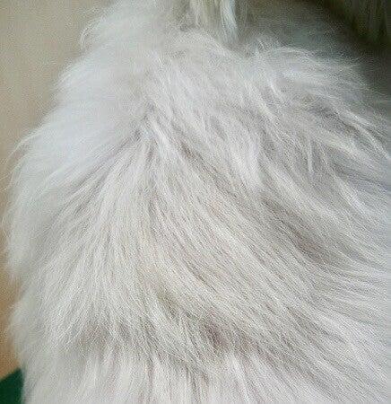 國賀トロワ治療後背部