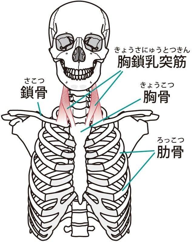 骨 解剖学