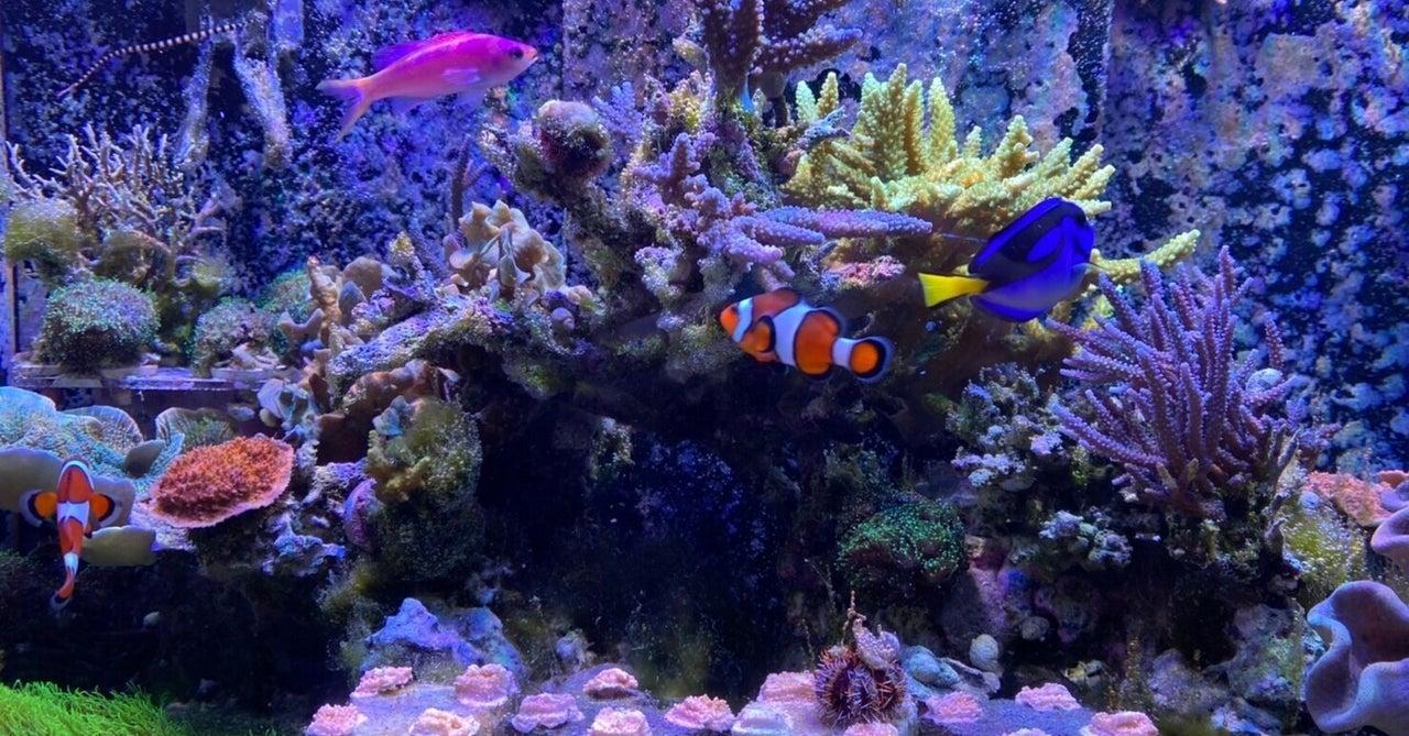 東京で沖縄のサンゴを見ました