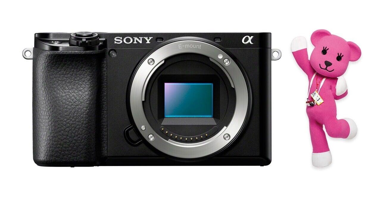 多彩なラインナップのSONYデジタル一眼カメラ「α」どんな基準で選ぶ?