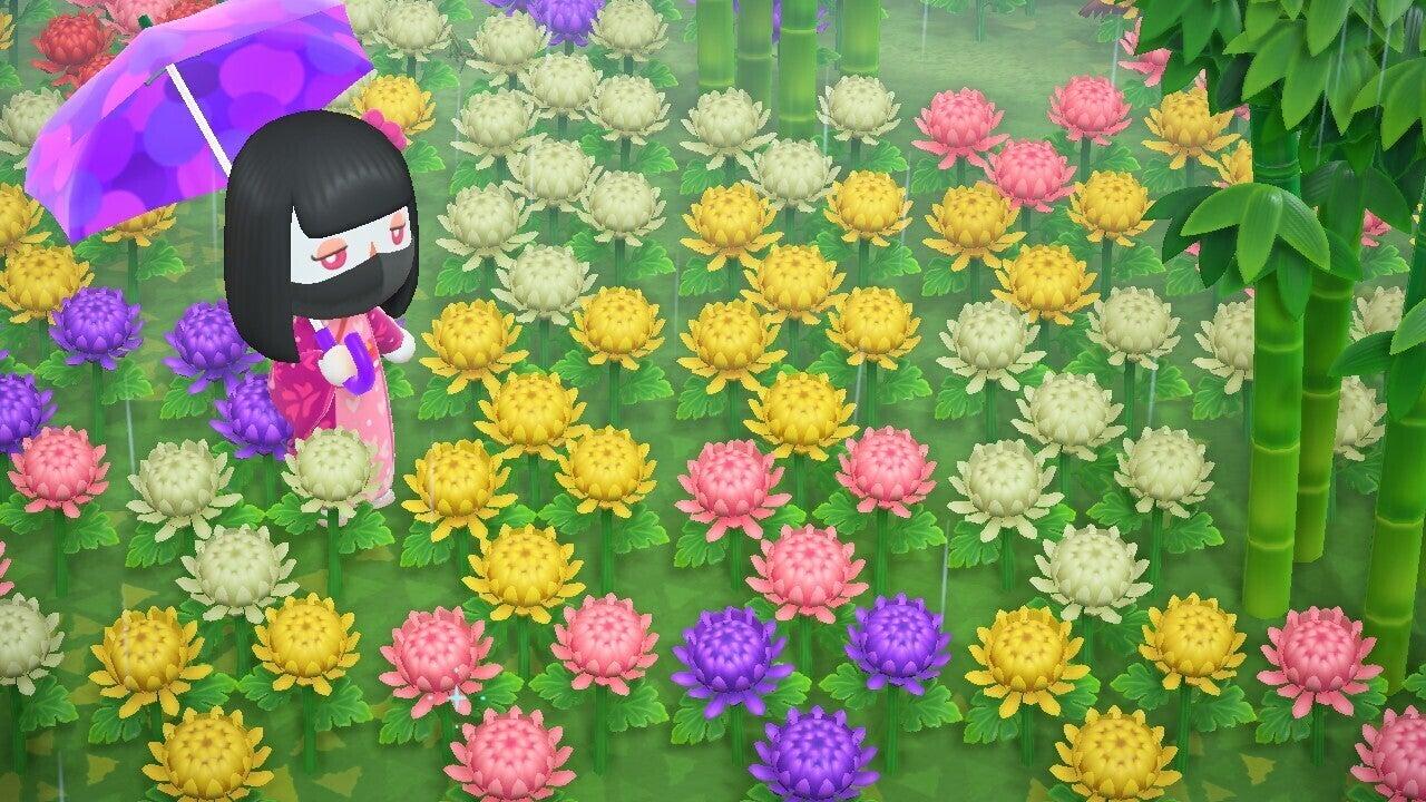 あつ 森 菊 の 花