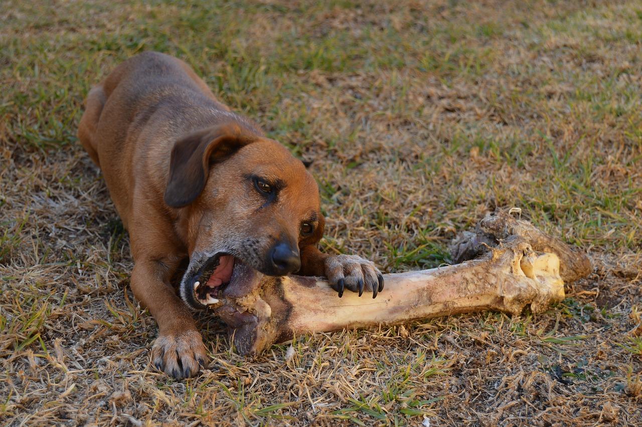 犬 骨噛む