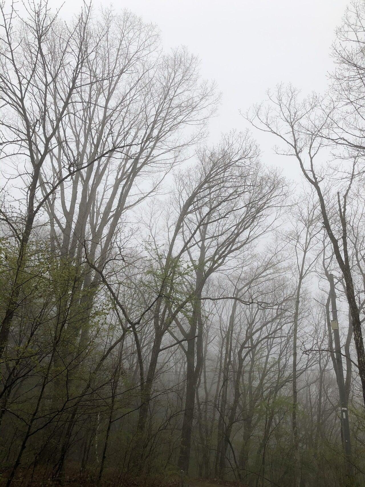 森は生きている