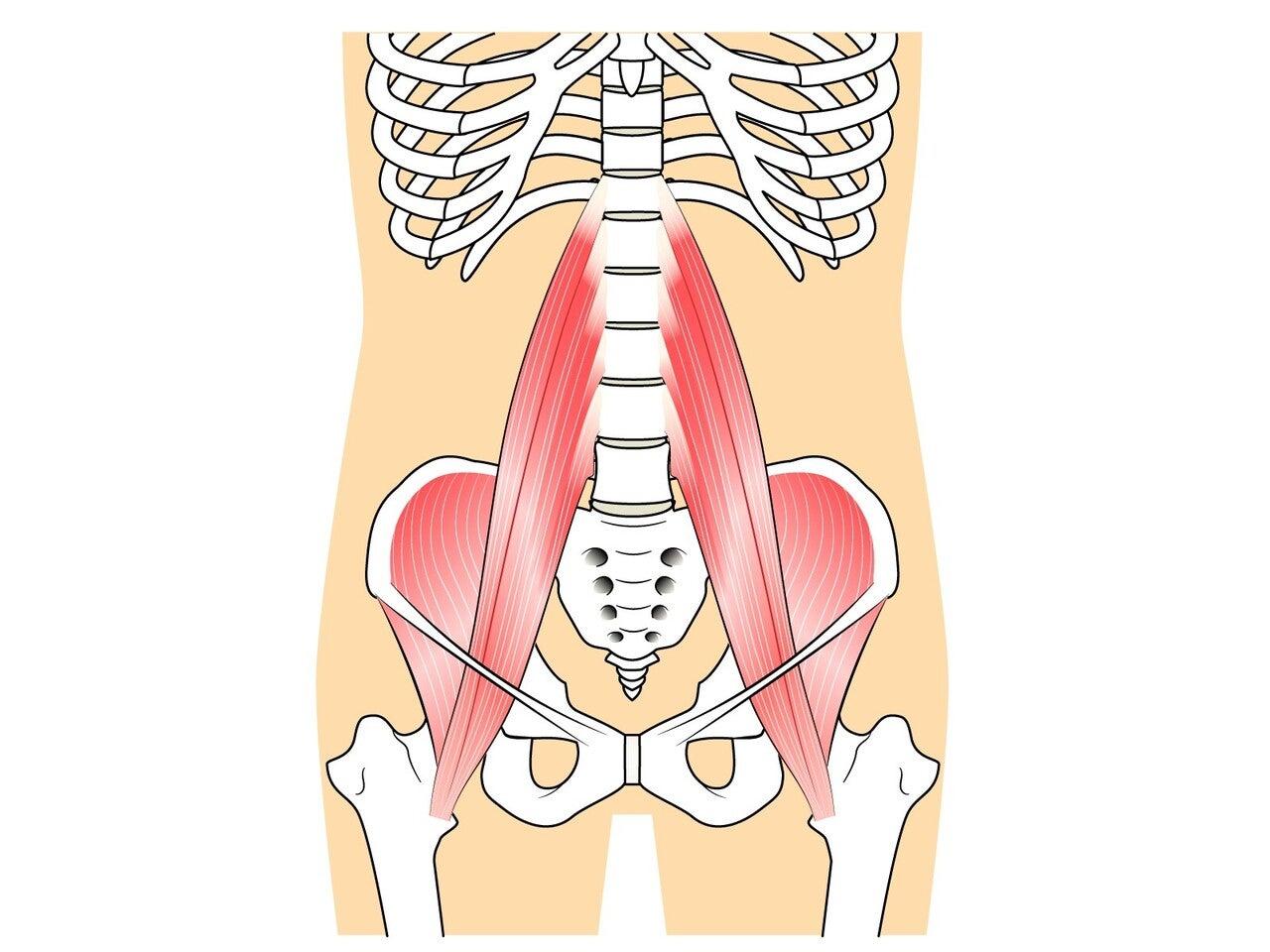 解剖 腸腰筋