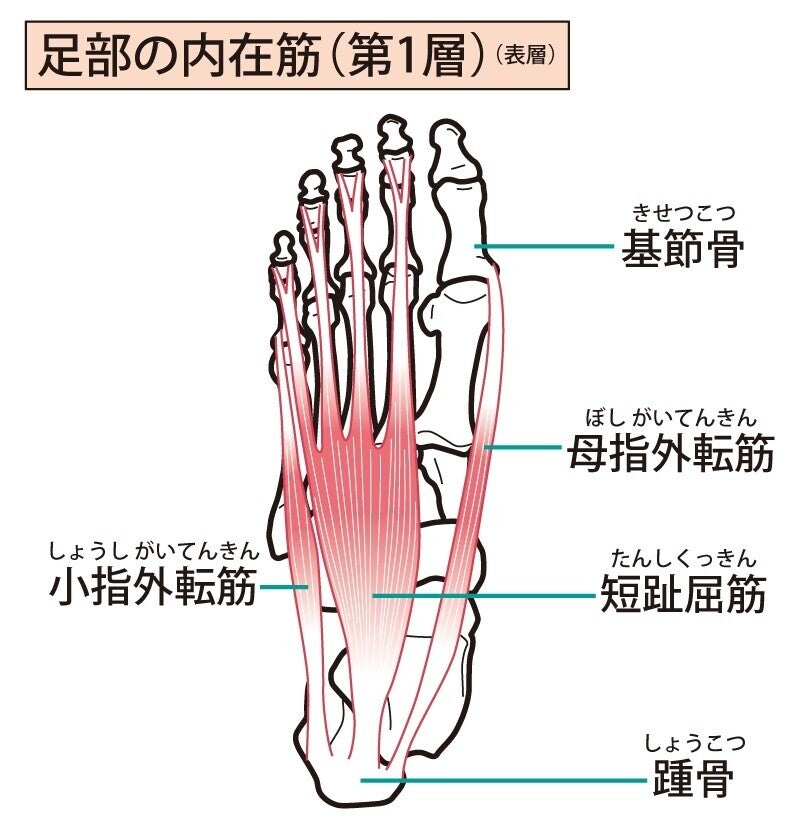 足裏の筋肉