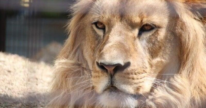 しいたけ占い 獅子座 性格