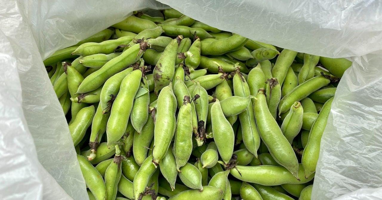 【自然農】たった3つの作業で赤そら豆が収穫できました(2021/05/09)