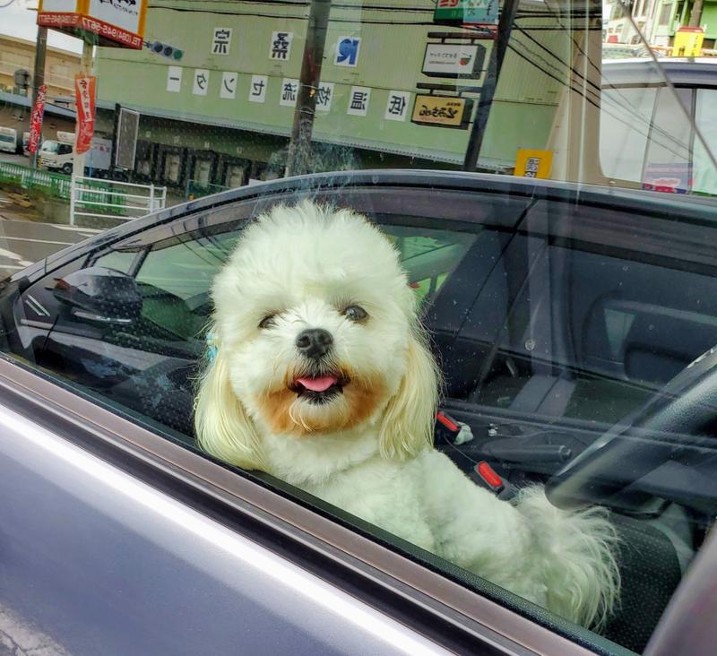 犬 かわいい