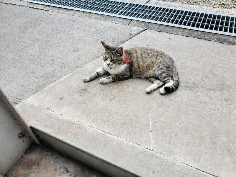 たかの巣カフェ 外観 ネコ