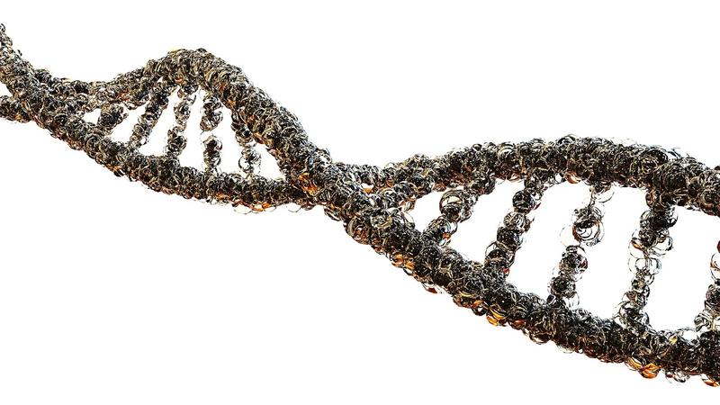 遺伝子 DNA