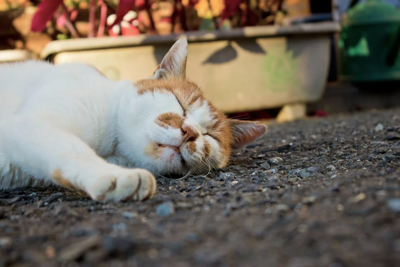猫 寝る 暑い