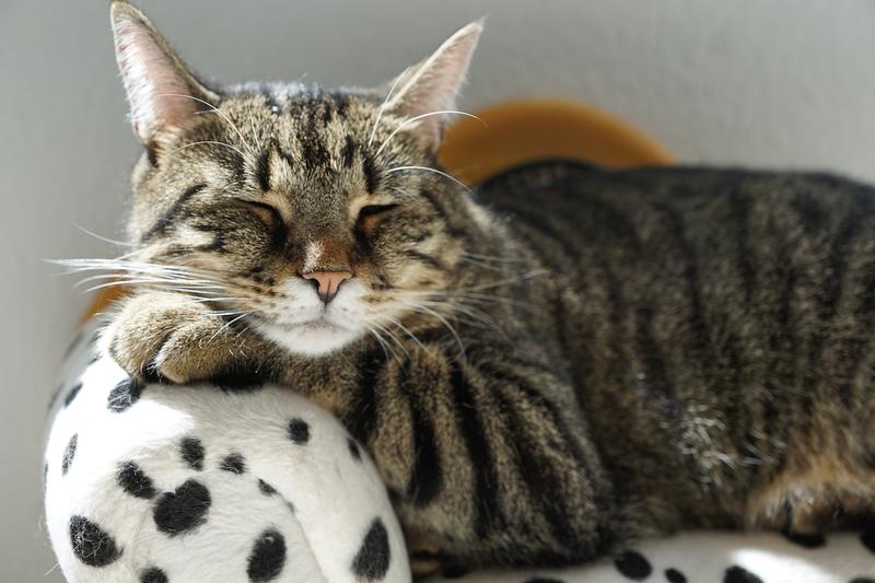 猫 寝る めんどくさい