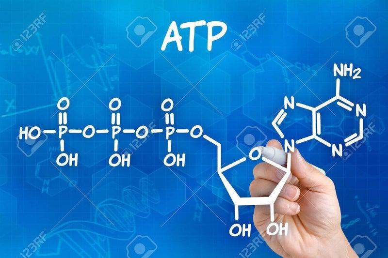 59198302-atp-の化学式を描画ペンを持つ手