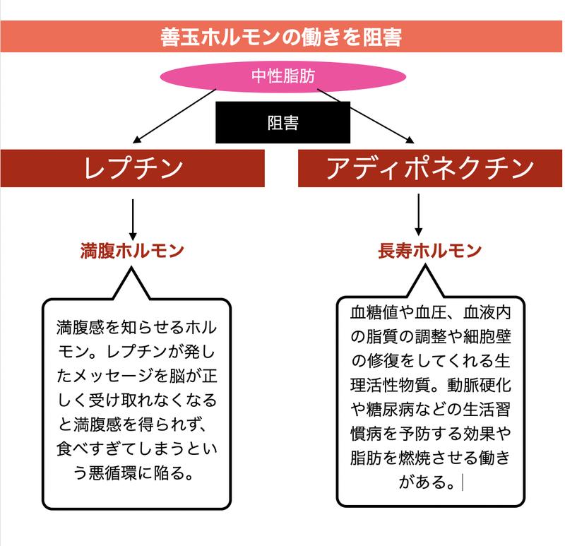 中性脂肪 解説図