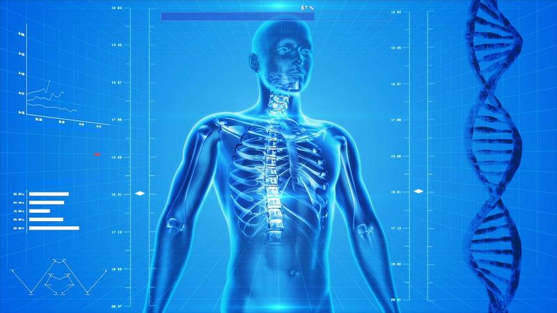 人体 解剖