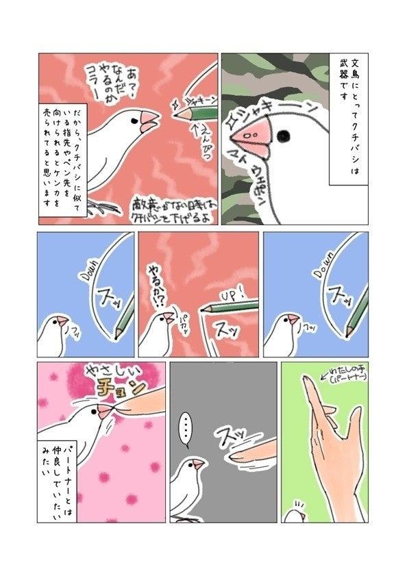 文鳥p31