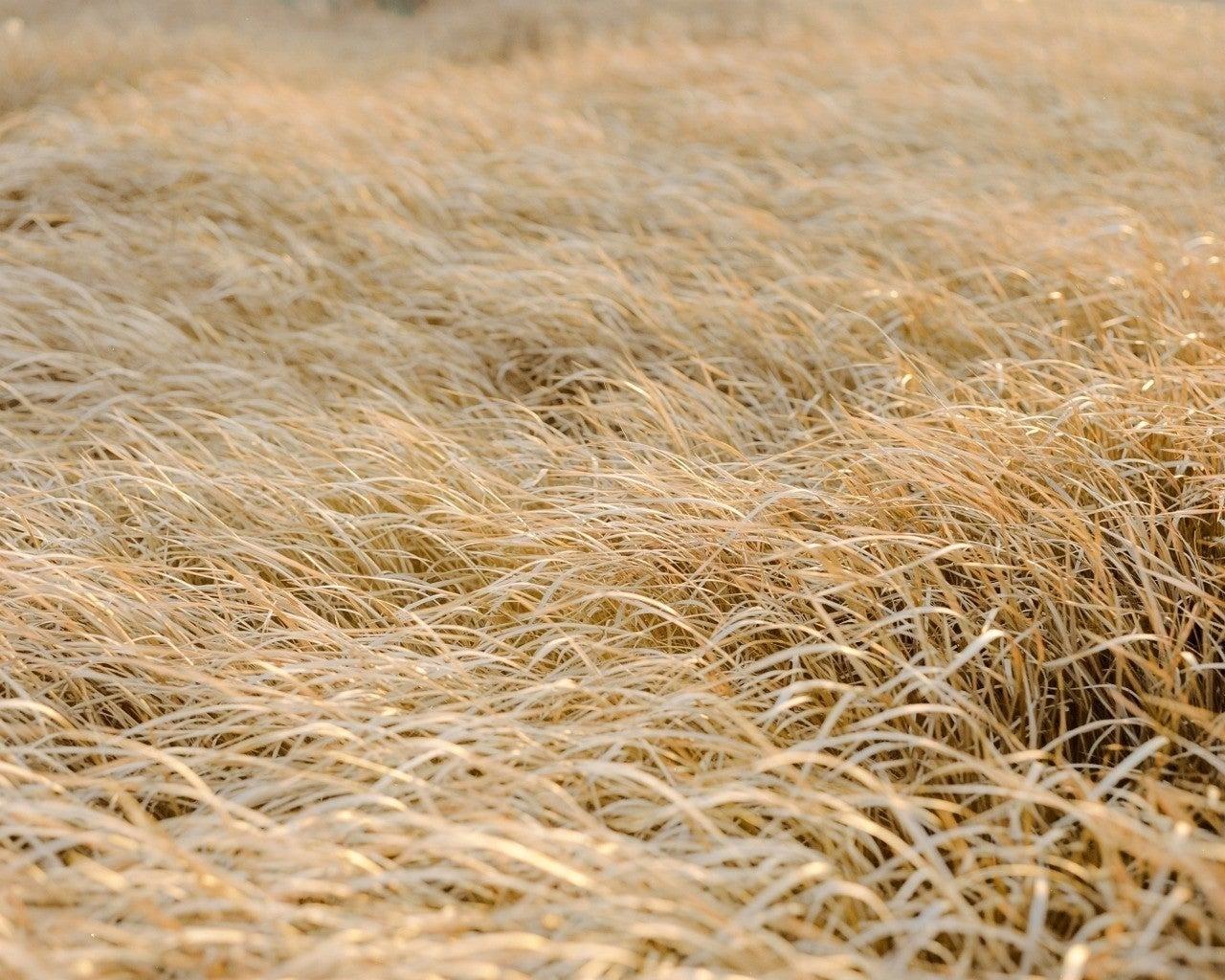 の し らむ に る 吹く の むべ 草木 ば を を といふ から 秋 山風 れ 嵐