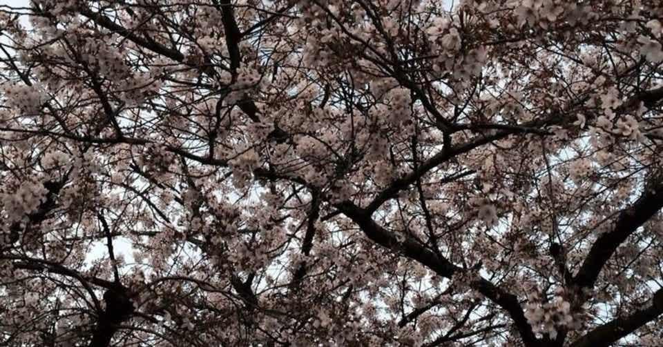 姥桜|だるま太朗|note