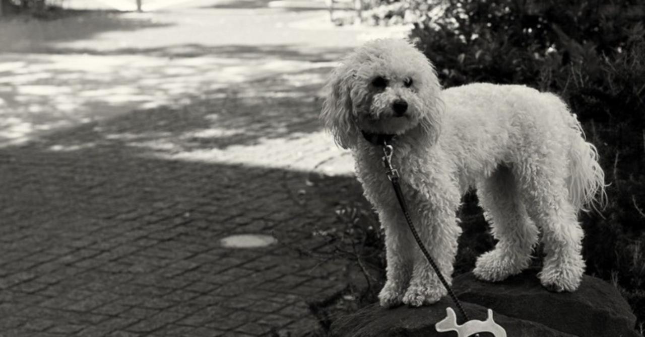 犬と猫の飼育頭数が逆転をした今、トリミングサロンの未来はどうなる?|ゆう@トリミングサロン集客・トリ...
