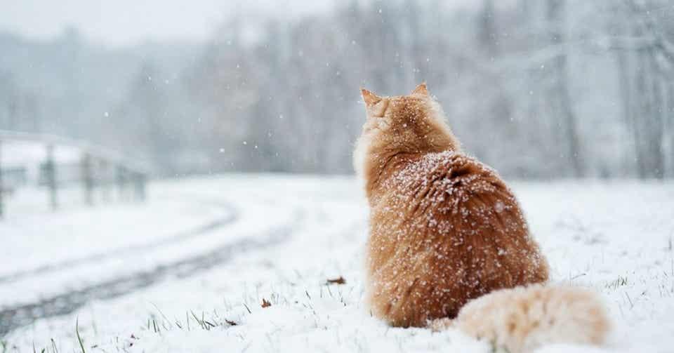 2. 雪に埋もれて|Takafumi Ito|note