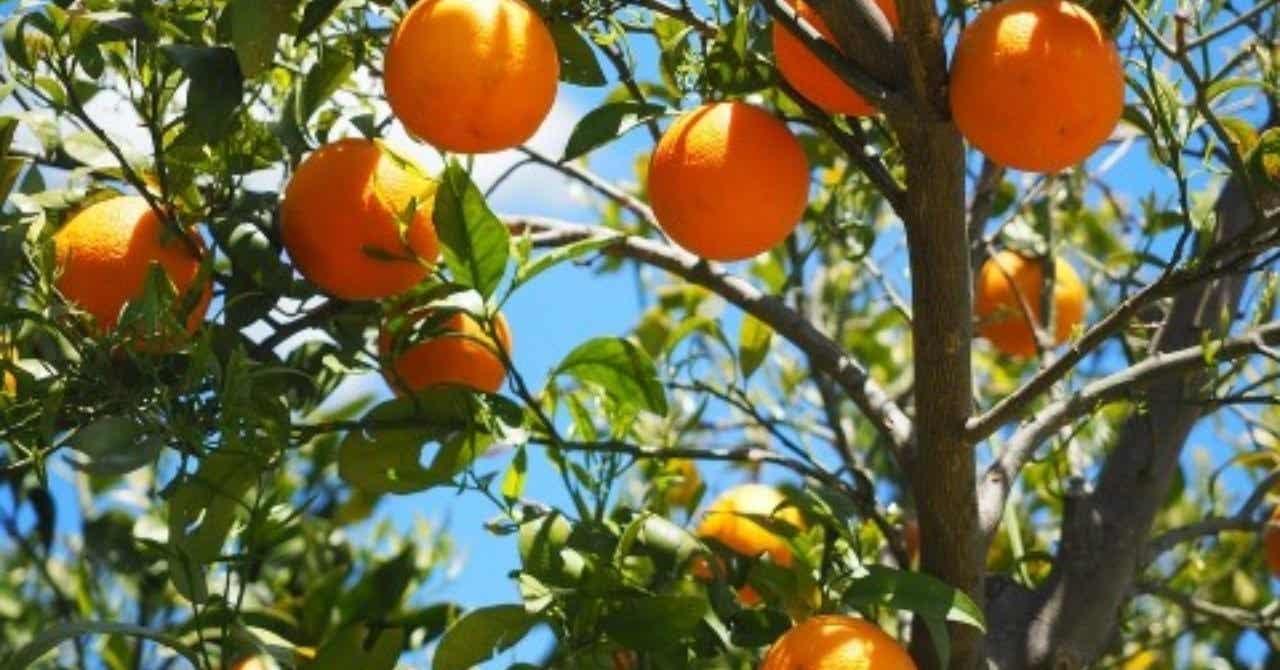 オレンジデイズ ドラマ 動画